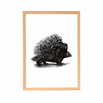 Nice to Have - Porcupine