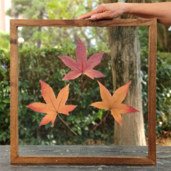 Save The Flowers - Glass N012 Frame
