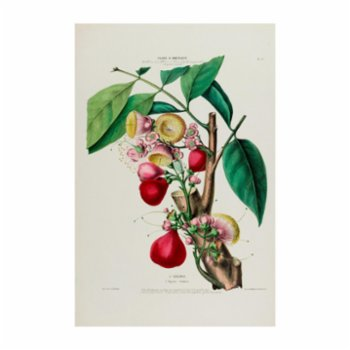 Sauca Collection - L'Eugenie Botanical Poster