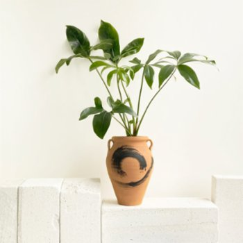Mediterra Botanic - Philodendron Hydria Plant and Pot