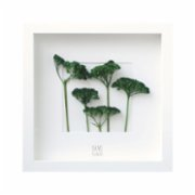 Save The Flowers  Miniature Forest Frame