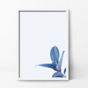 Action Zebra	  Blue Flower Art Print