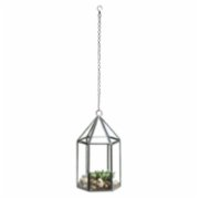 Warm Design	  Honeycomb Glass Hanging Terrarium II