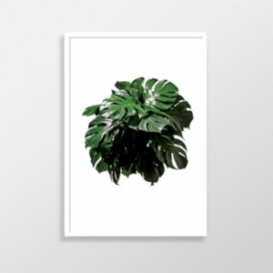 Action Zebra	  Monstera Art Print