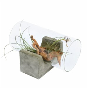 Urban Atölye  Yatay Airplant Glass Case