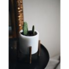 MarbLove Marble Pot Wtih Wooden Stand