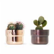 Coho Objet	  Prime Copper Planter Set of 2