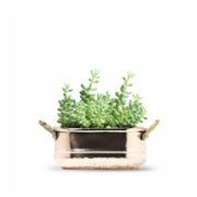 Coho Objet	  Artisan Oval Copper Planter