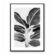 Normmade  Heliconia Art Print