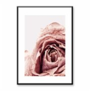 Normmade  Rose Print