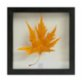 Save The Flowers Glass No1 Frame