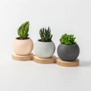 Womodesign  Concrete Flowerpot With Wooden Platform