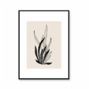 Normmade  Bregne Art Print