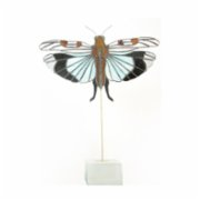 Merve Ciner Art  Blue Winged Grasshoppers Object
