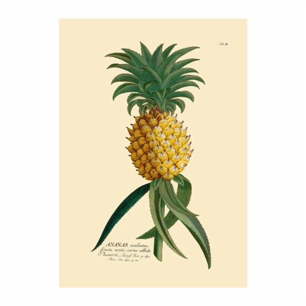 Sauca Collection	 Ananas Printing