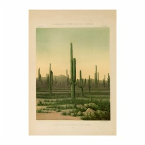 Sauca Collection	  American Cactus Printing