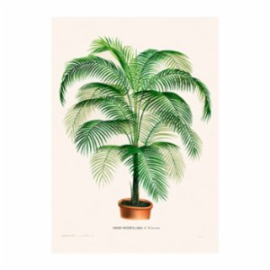 Sauca Collection	  Coco Weddelliana Tree Printing