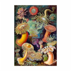 Sauca Collection	  Haeckel - Coral Reef Forest Printing