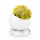 Coho Objet Earth Flower Pot with Crystal Circle Marble